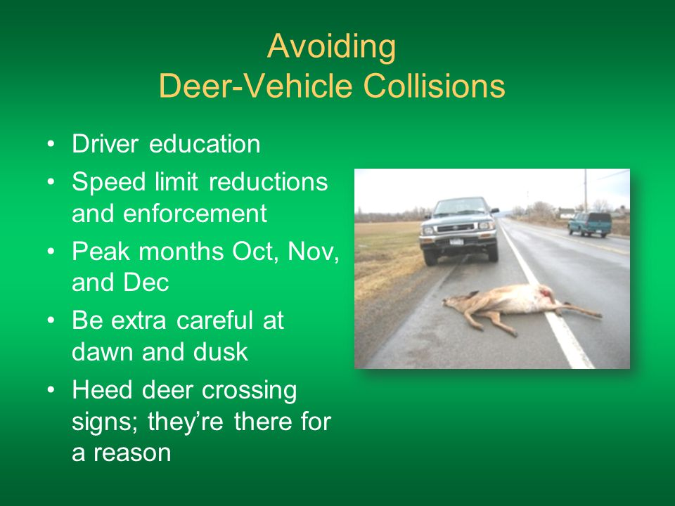 Avoiding Deer-Vehicle Collisions Driver education Speed limit reductions and enforcement Peak months Oct, Nov, and Dec Be extra careful at dawn and dusk Heed deer crossing signs; they're there for a reason