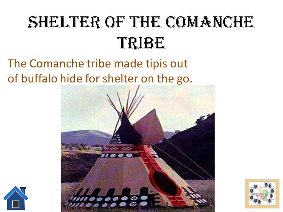Food of the Comanche Tribe The Comanche tribe mostly eats Buffalo, rabbits, fish, nuts, berries, and wild potatoes.