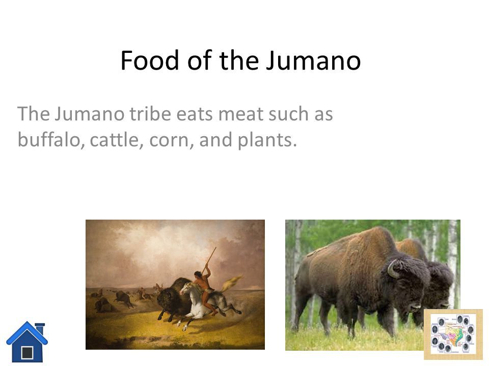 Jumano tribe Click here to learn about their food! Click here to learn about their shelter! Click here to learn about their tools and weapons! Click h