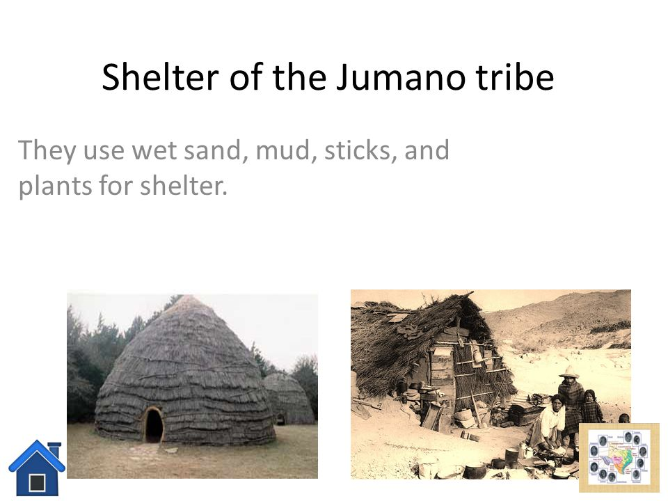 Food of the Jumano The Jumano tribe eats meat such as buffalo, cattle, corn, and plants.