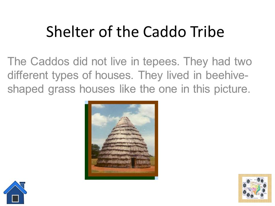 Food of the Caddo Tribe They grew beans, corn, squash, sunflower seeds, and tobacco.