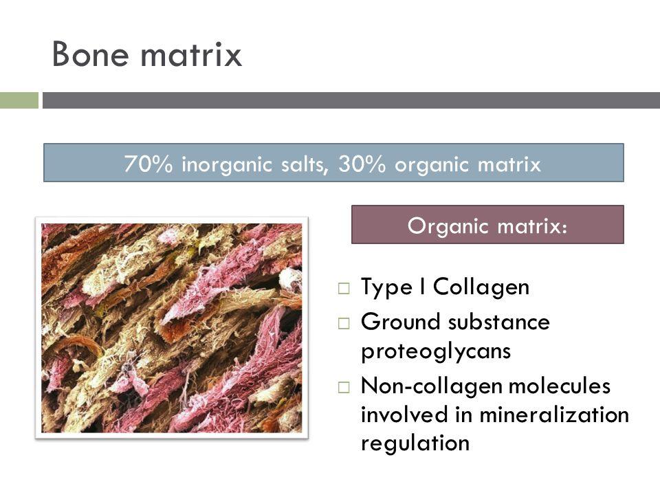 Bone matrix  Type I Collagen  Ground substance proteoglycans  Non-collagen molecules involved in mineralization regulation 70% inorganic salts, 30%