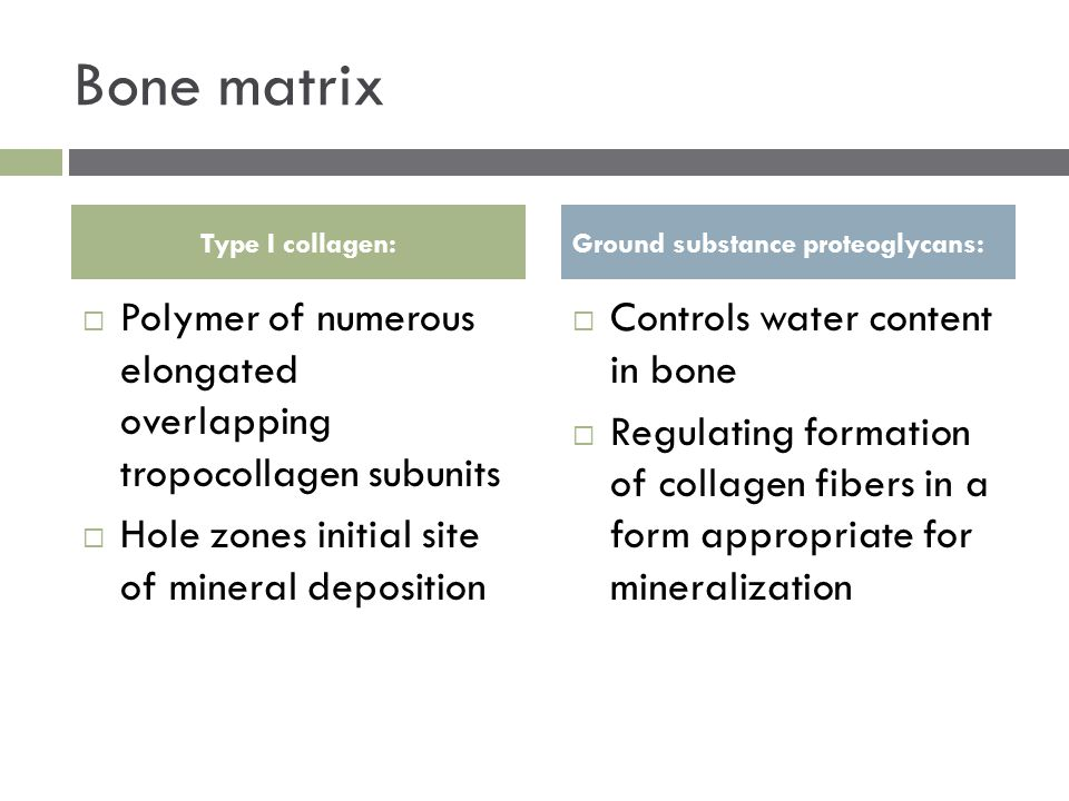 Bone matrix  Polymer of numerous elongated overlapping tropocollagen subunits  Hole zones initial site of mineral deposition  Controls water content in bone  Regulating formation of collagen fibers in a form appropriate for mineralization Type I collagen:Ground substance proteoglycans: