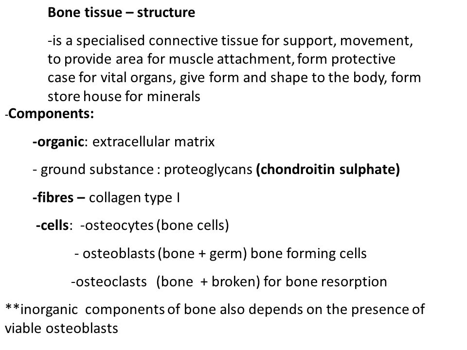 Bone tissue – structure -is a specialised connective tissue for support, movement, to provide area for muscle attachment, form protective case for vital organs, give form and shape to the body, form store house for minerals - Components: -organic: extracellular matrix - ground substance : proteoglycans (chondroitin sulphate) -fibres – collagen type I -cells: -osteocytes (bone cells) - osteoblasts (bone + germ) bone forming cells -osteoclasts (bone + broken) for bone resorption **inorganic components of bone also depends on the presence of viable osteoblasts