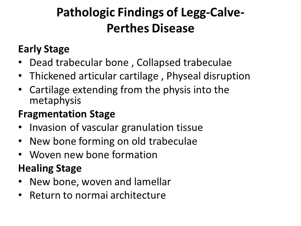 Pathologic Findings of Legg-Calve- Perthes Disease Early Stage Dead trabecular bone, Collapsed trabeculae Thickened articular cartilage, Physeal disruption Cartilage extending from the physis into the metaphysis Fragmentation Stage Invasion of vascular granulation tissue New bone forming on old trabeculae Woven new bone formation Healing Stage New bone, woven and lamellar Return to normai architecture