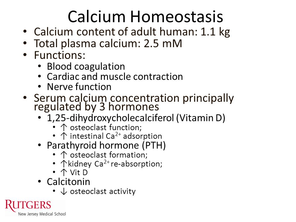 Calcium Homeostasis Calcium content of adult human: 1.1 kg Total plasma calcium: 2.5 mM Functions: Blood coagulation Cardiac and muscle contraction Ne