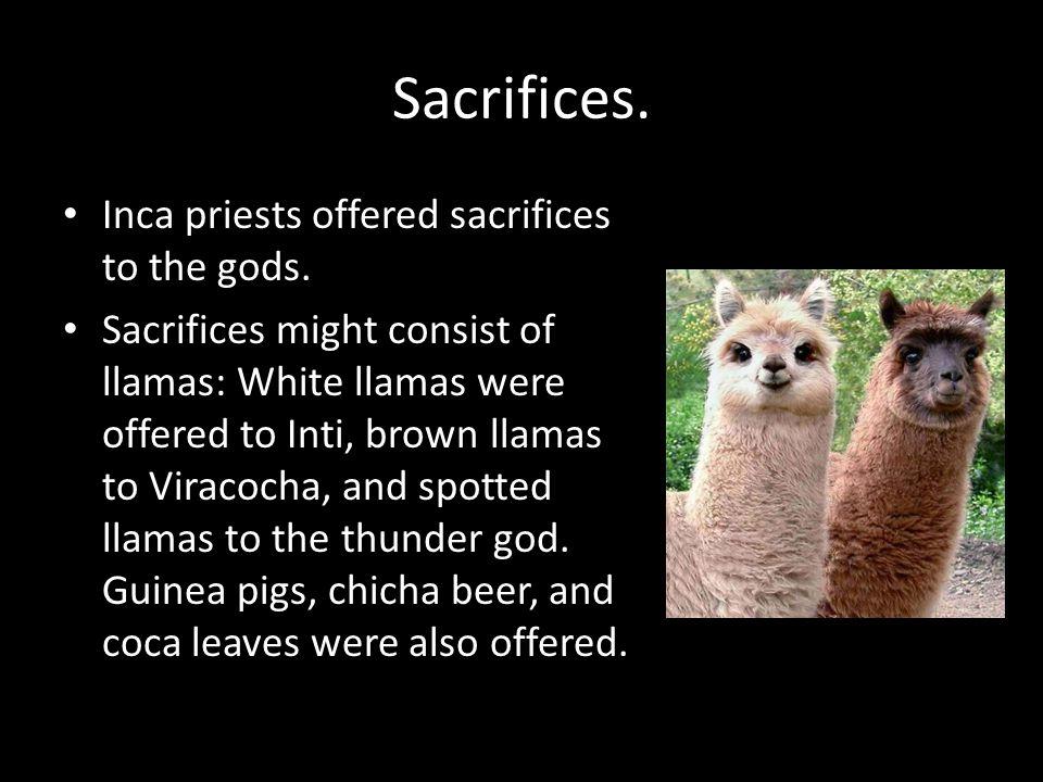 Human sacrifice-Capacocha Sometimes human sacrifice was also made.