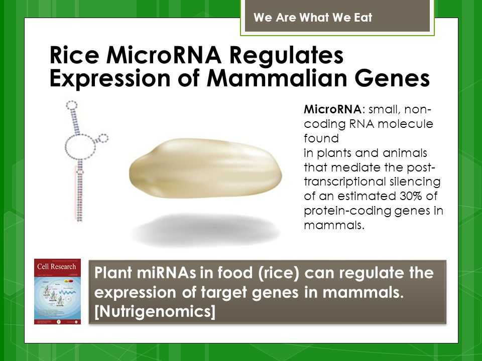 Rice MicroRNA Regulates Expression of Mammalian Genes We Are What We Eat Plant miRNAs in food (rice) can regulate the expression of target genes in mammals.