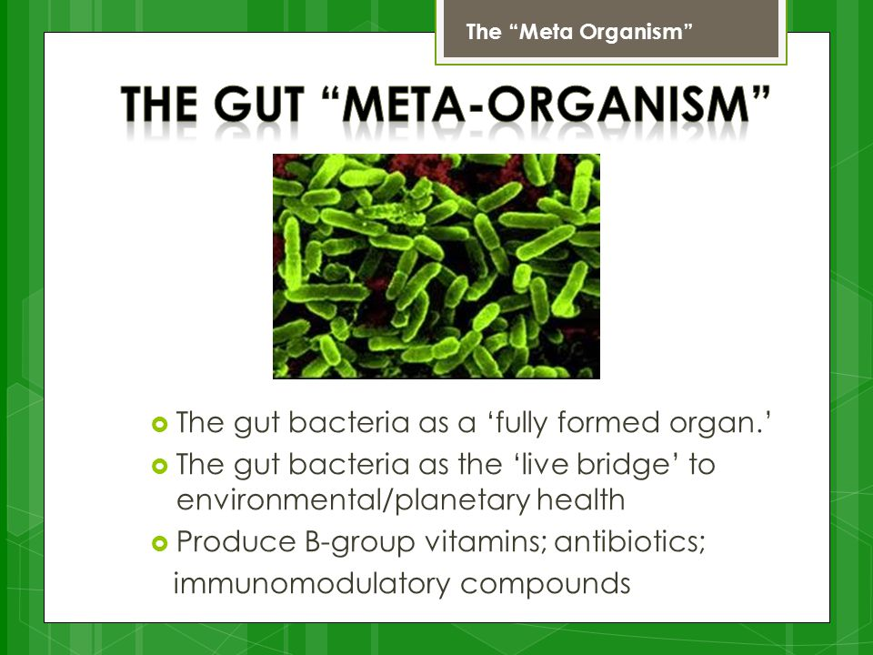  The gut bacteria as a 'fully formed organ.'  The gut bacteria as the 'live bridge' to environmental/planetary health  Produce B-group vitamins; antibiotics; immunomodulatory compounds The Meta Organism