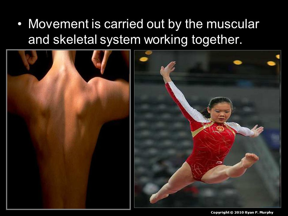 Movement is carried out by the muscular and skeletal system working together.