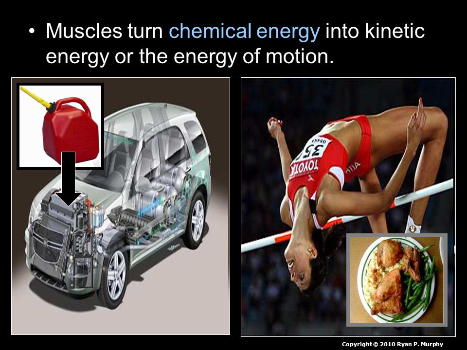 Muscles turn chemical energy into kinetic energy or the energy of motion.