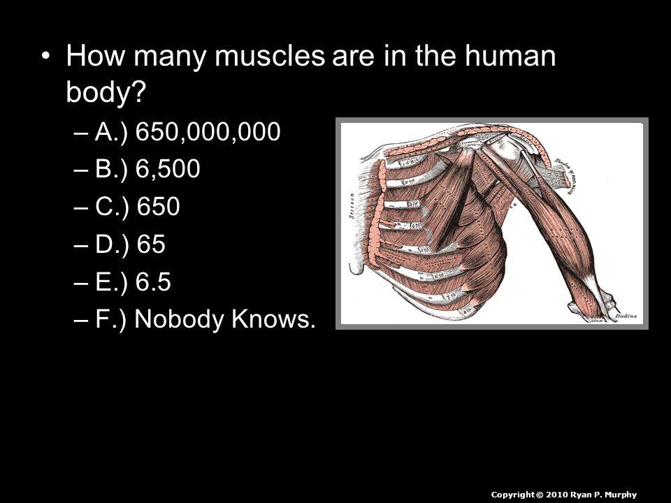 How many muscles are in the human body.