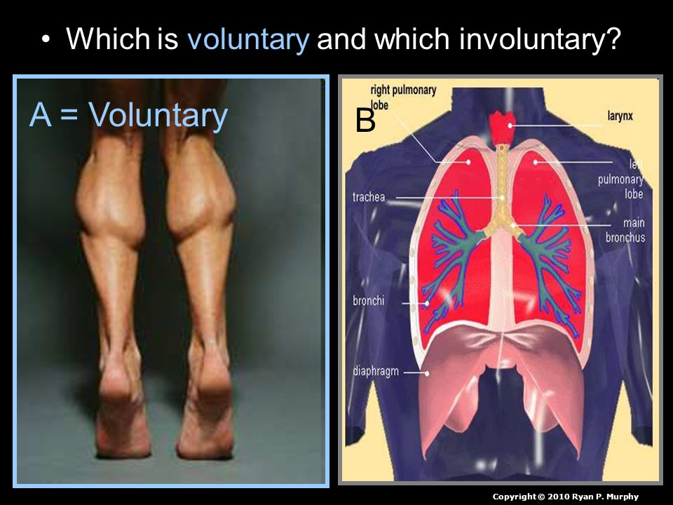 Which is voluntary and which involuntary A = Voluntary B Copyright © 2010 Ryan P. Murphy