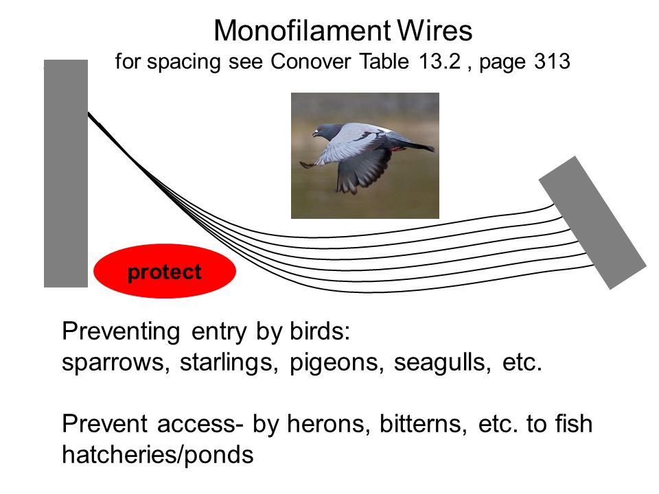 Monofilament Wires for spacing see Conover Table 13.2, page 313 Preventing entry by birds: sparrows, starlings, pigeons, seagulls, etc.