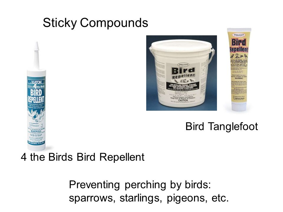Sticky Compounds Preventing perching by birds: sparrows, starlings, pigeons, etc.