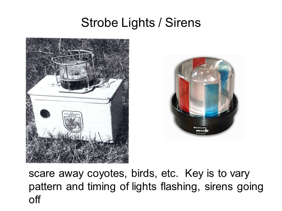 Strobe Lights / Sirens scare away coyotes, birds, etc.