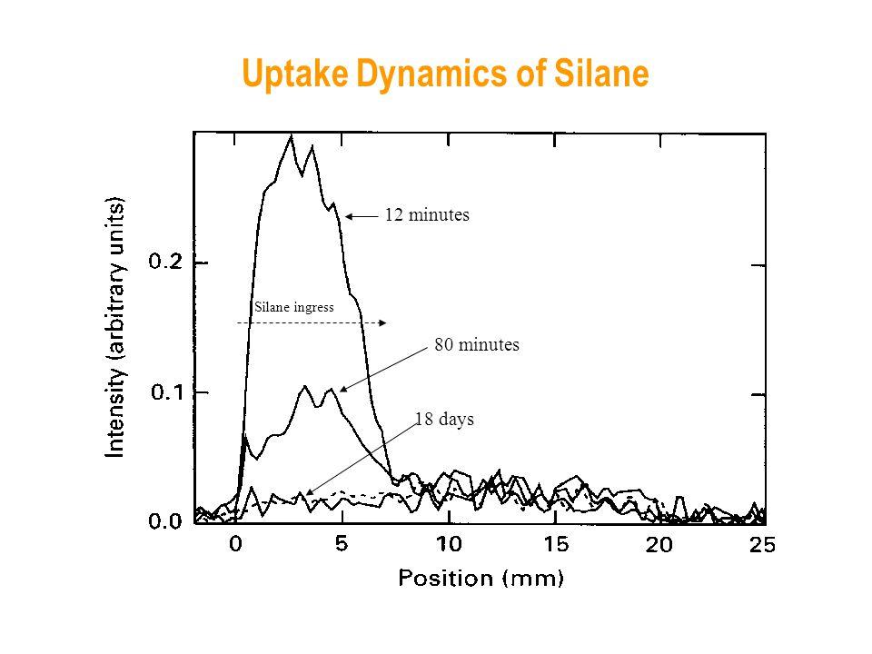 12 minutes 80 minutes 18 days Silane ingress Uptake Dynamics of Silane