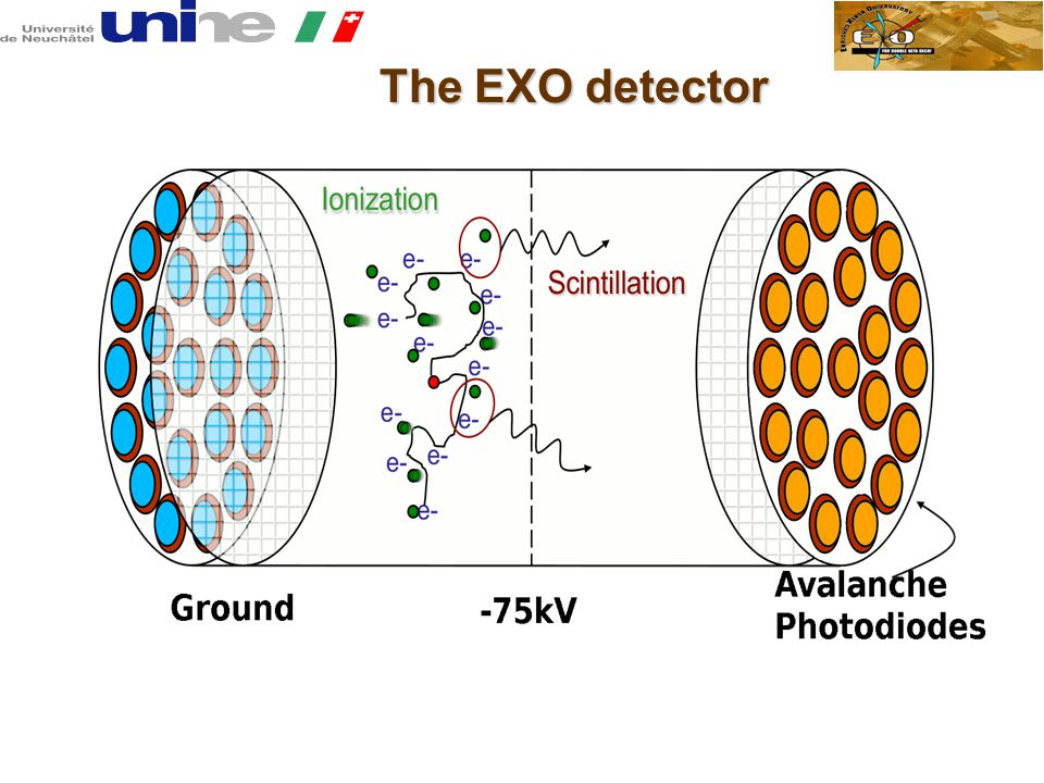 The EXO detector