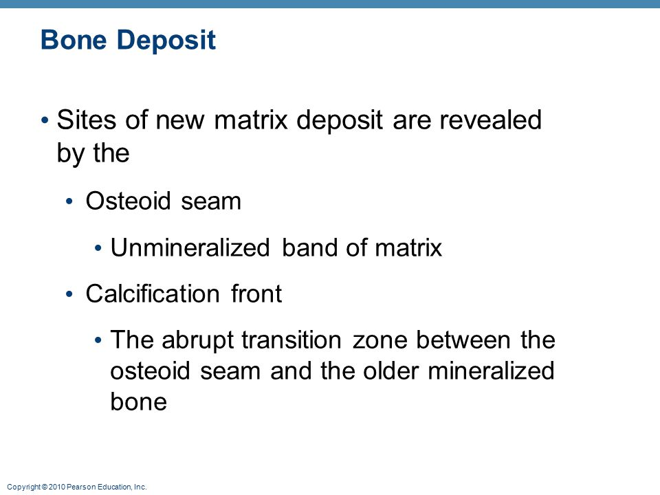 Copyright © 2010 Pearson Education, Inc. Bone Deposit Sites of new matrix deposit are revealed by the Osteoid seam Unmineralized band of matrix Calcif