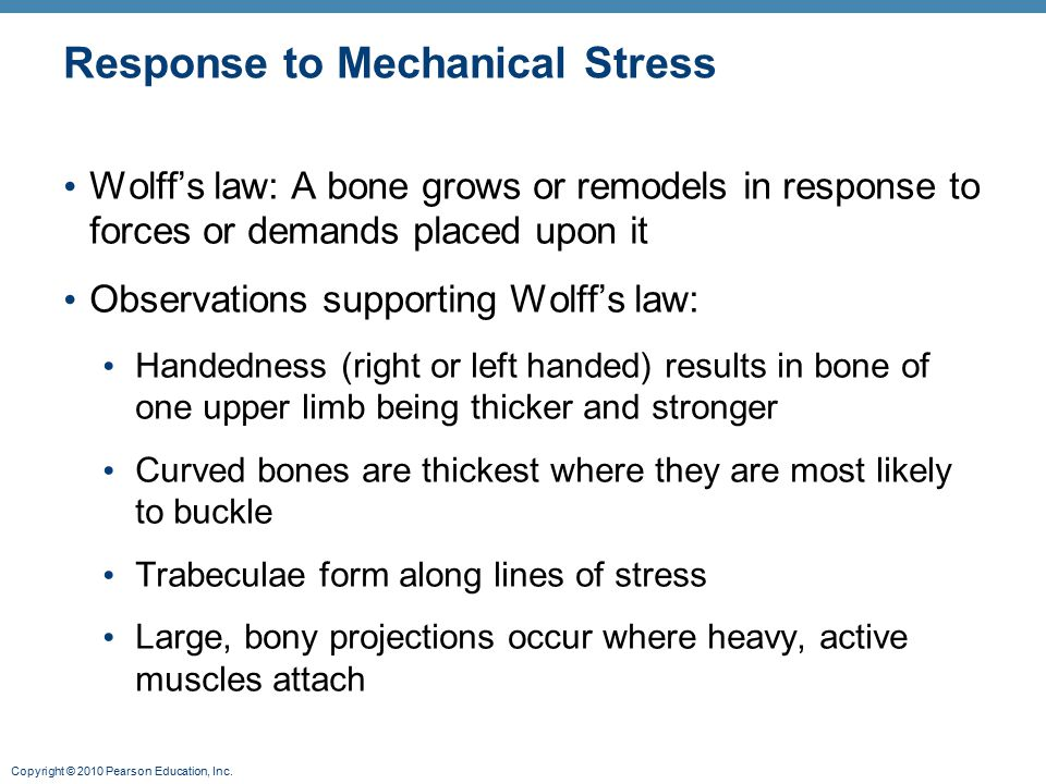 Copyright © 2010 Pearson Education, Inc. Response to Mechanical Stress Wolff's law: A bone grows or remodels in response to forces or demands placed u