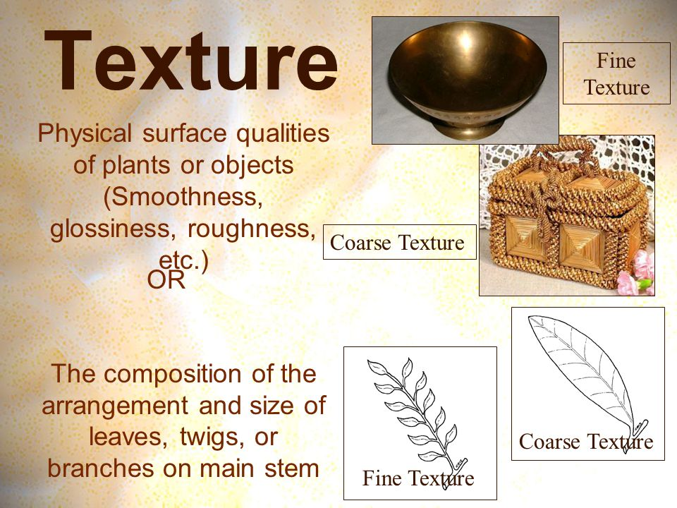 Texture Physical surface qualities of plants or objects (Smoothness, glossiness, roughness, etc.) The composition of the arrangement and size of leaves, twigs, or branches on main stem OR Fine Texture Coarse Texture Fine Texture Coarse Texture