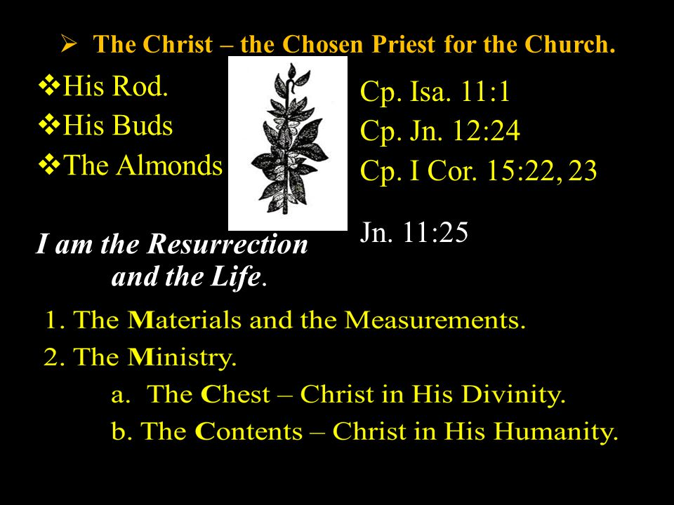  The Christ – the Chosen Priest for the Church.  His Rod.