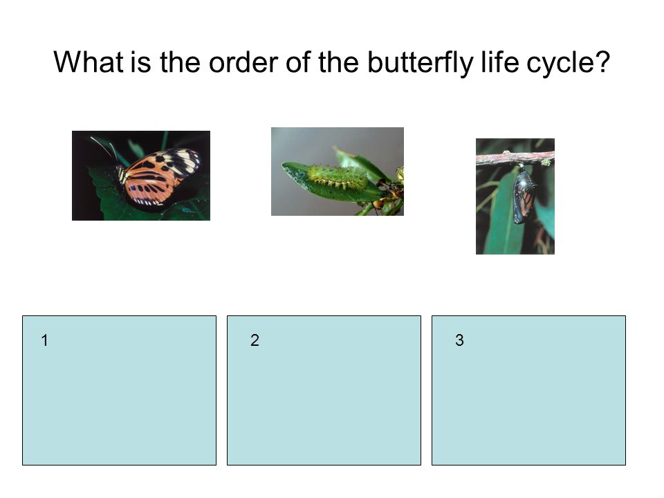 321 What is the order of the butterfly life cycle?