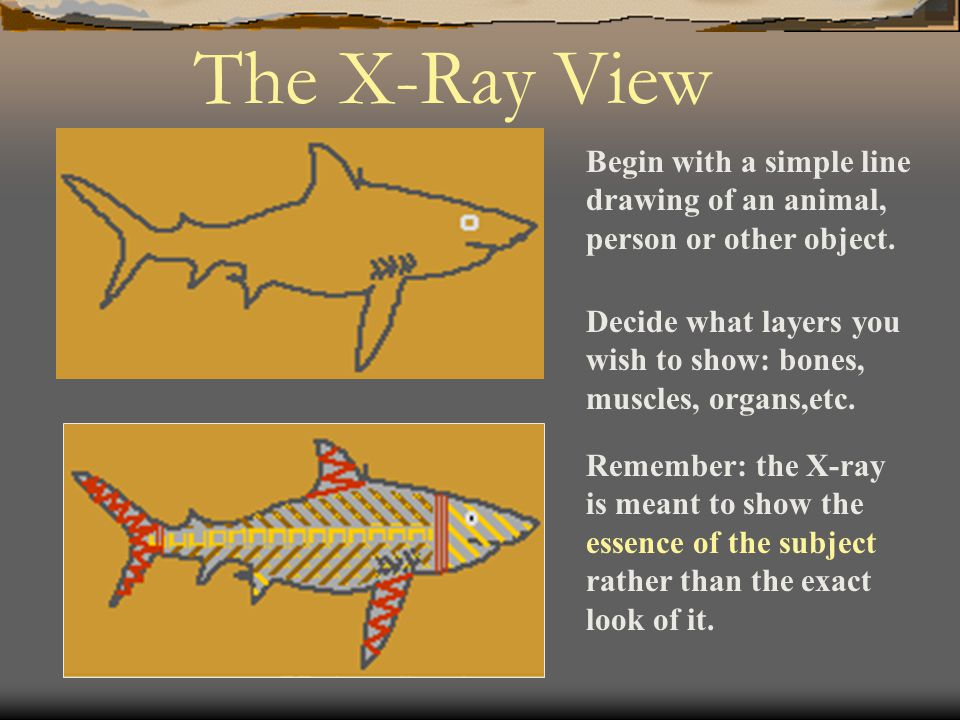 Begin with a simple line drawing of an animal, person or other object. The X-Ray View Decide what layers you wish to show: bones, muscles, organs,etc.