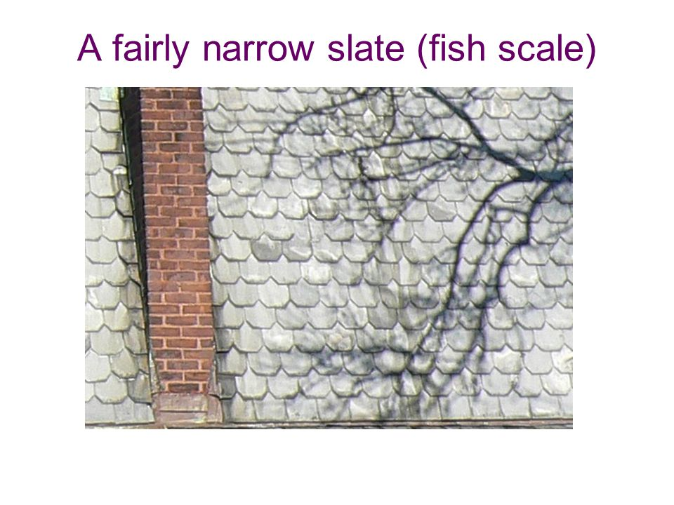 A fairly narrow slate (fish scale)