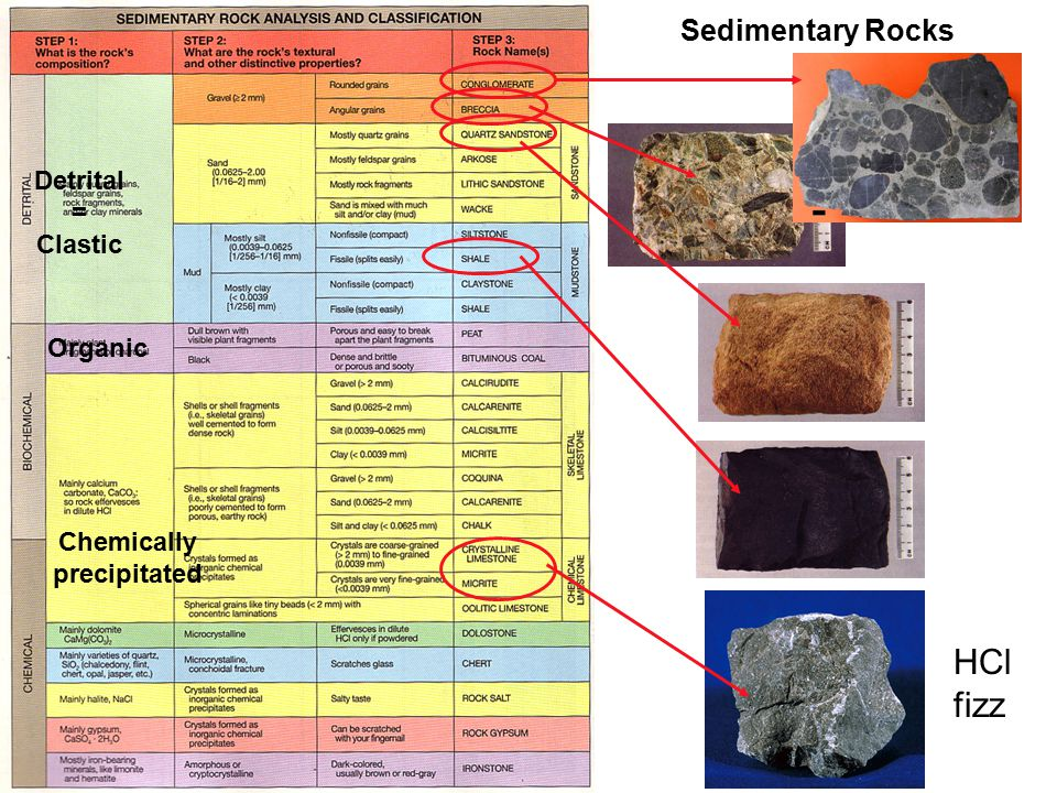 Sedimentary Rocks Detrital = Clastic HCl fizz Organic Chemically precipitated