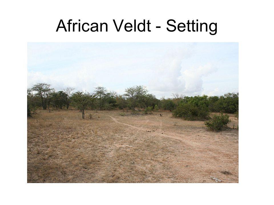 African Veldt - Setting