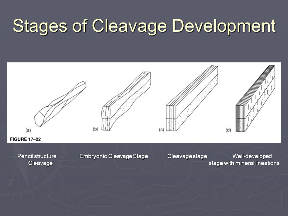 Stages of Cleavage Development Pencil structure Embryonic Cleavage Stage Cleavage stage Well-developed Cleavage stage with mineral lineations