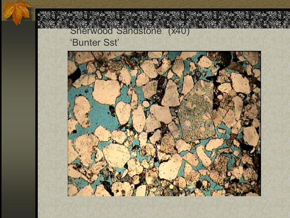 Sherwood Sandstone (x40) 'Bunter Sst'