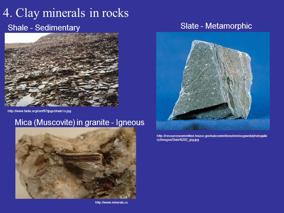 4. Clay minerals in rocks Shale - Sedimentary http://www.biota.org/conf97/jpgs/shale1o.jpg Slate - Metamorphic Mica (Muscovite) in granite - Igneous h