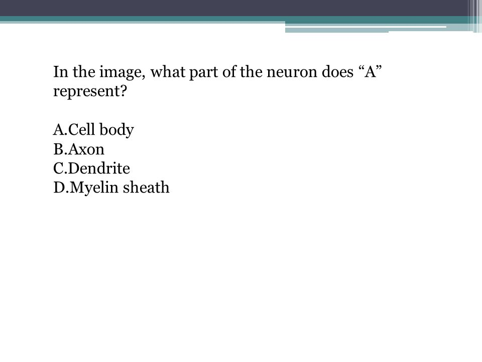 "In the image, what part of the neuron does ""A"" represent? A.Cell body B.Axon C.Dendrite D.Myelin sheath"