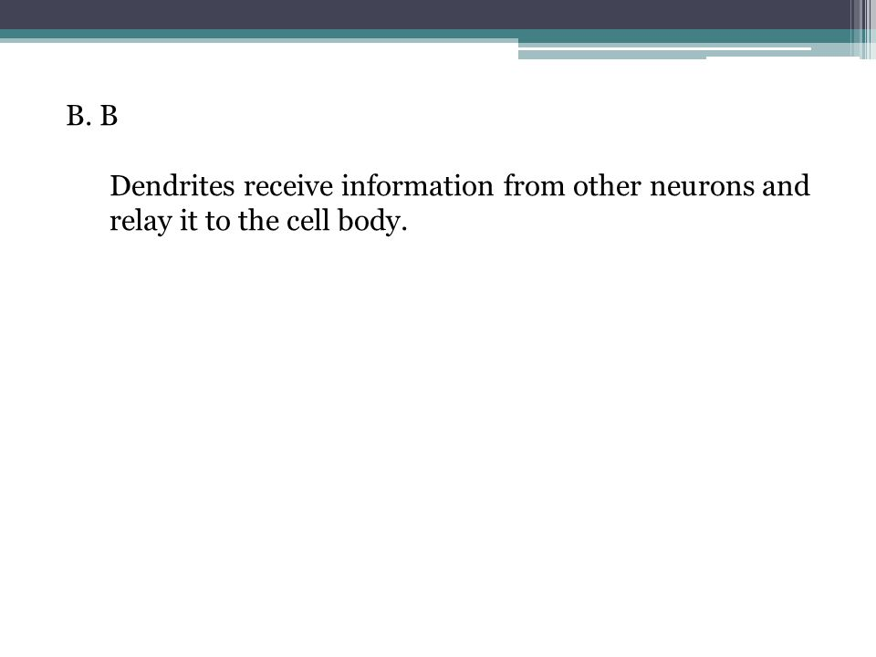 B. B Dendrites receive information from other neurons and relay it to the cell body.
