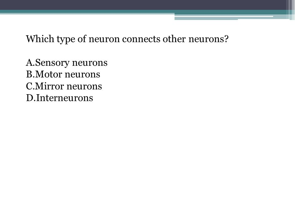 Which type of neuron connects other neurons? A.Sensory neurons B.Motor neurons C.Mirror neurons D.Interneurons