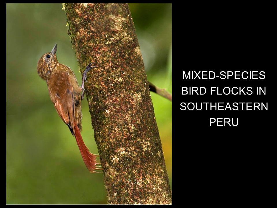1 MIXED-SPECIES BIRD FLOCKS IN SOUTHEASTERN PERU