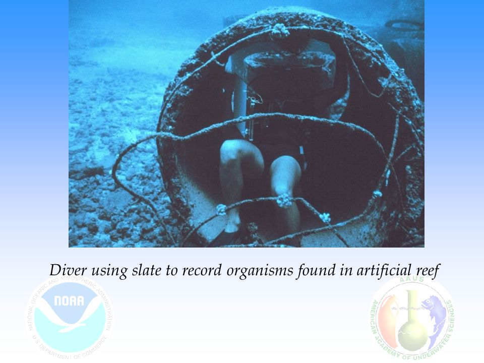 Diver using slate to record organisms found in artificial reef
