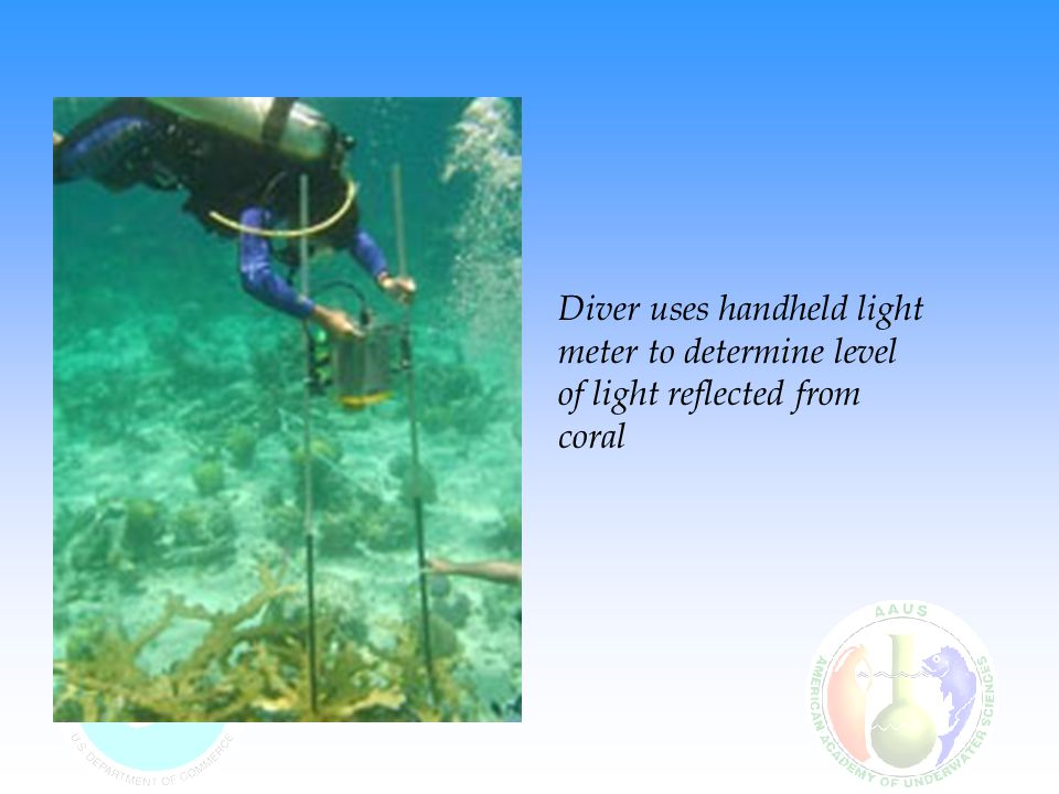 Diver uses handheld light meter to determine level of light reflected from coral