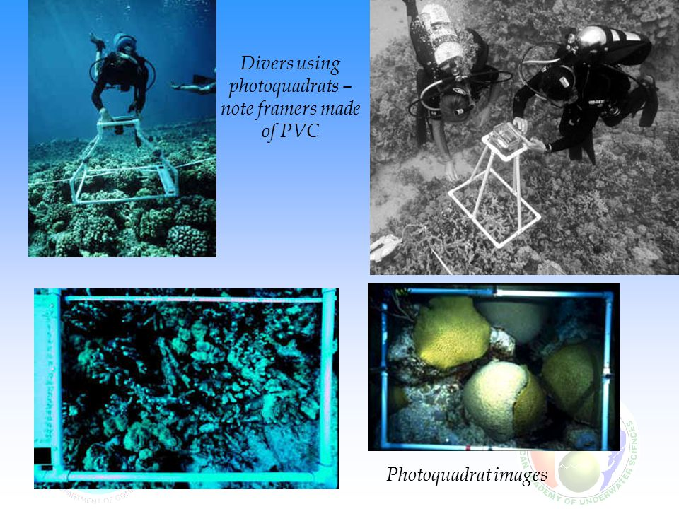 Photoquadrat images Divers using photoquadrats – note framers made of PVC
