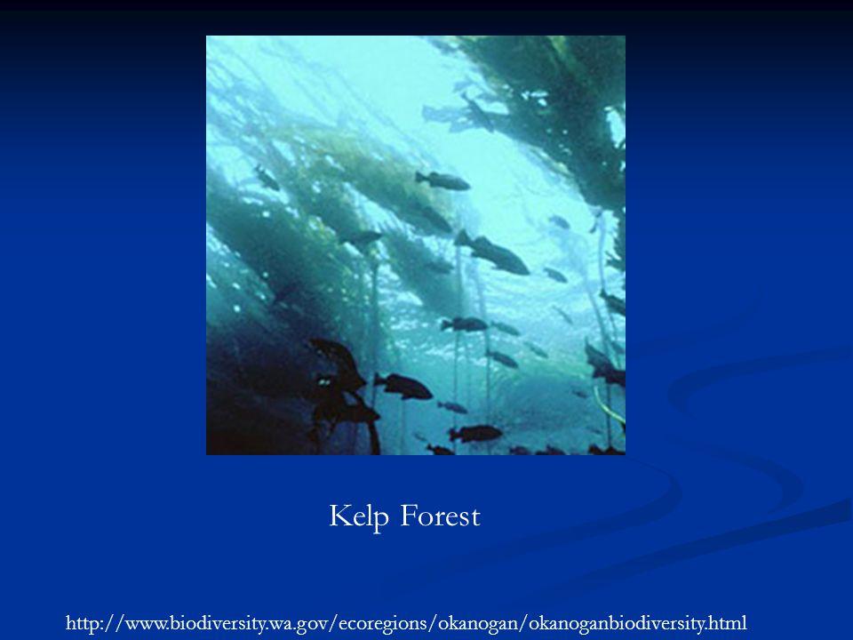 Kelp Forest http://www.biodiversity.wa.gov/ecoregions/okanogan/okanoganbiodiversity.html