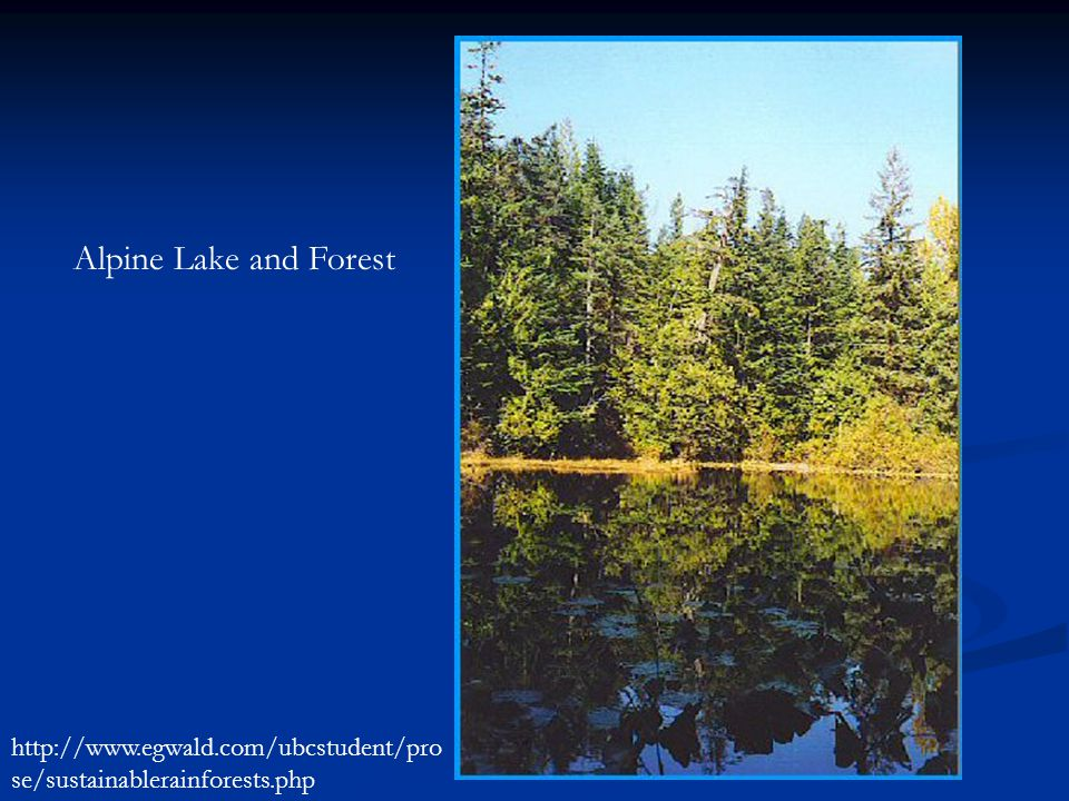 Alpine Lake and Forest http://www.egwald.com/ubcstudent/pro se/sustainablerainforests.php