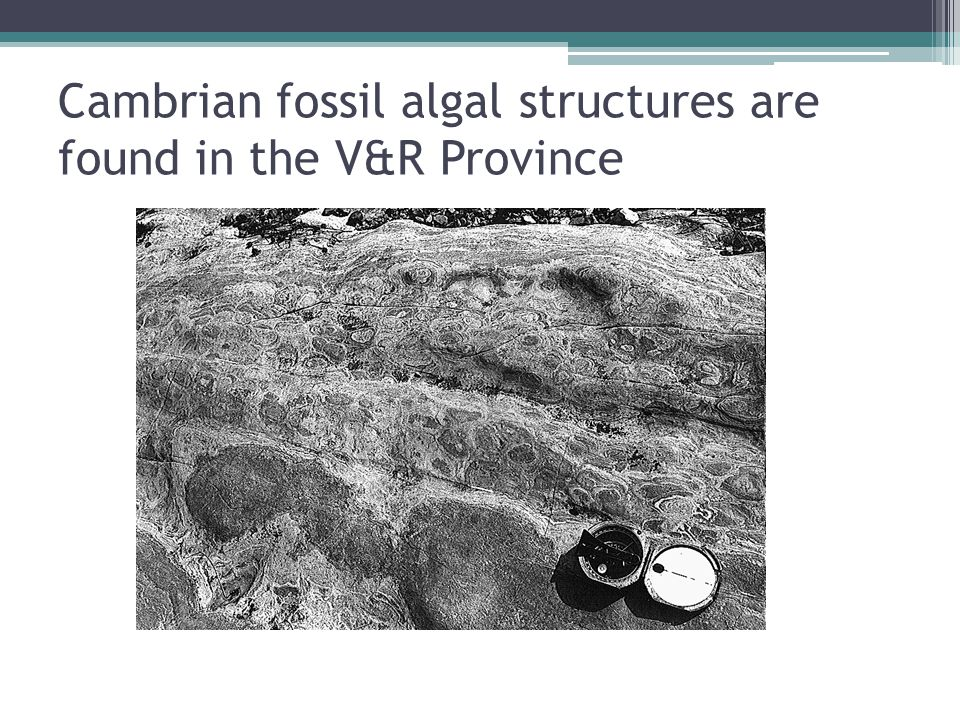 Cambrian fossil algal structures are found in the V&R Province