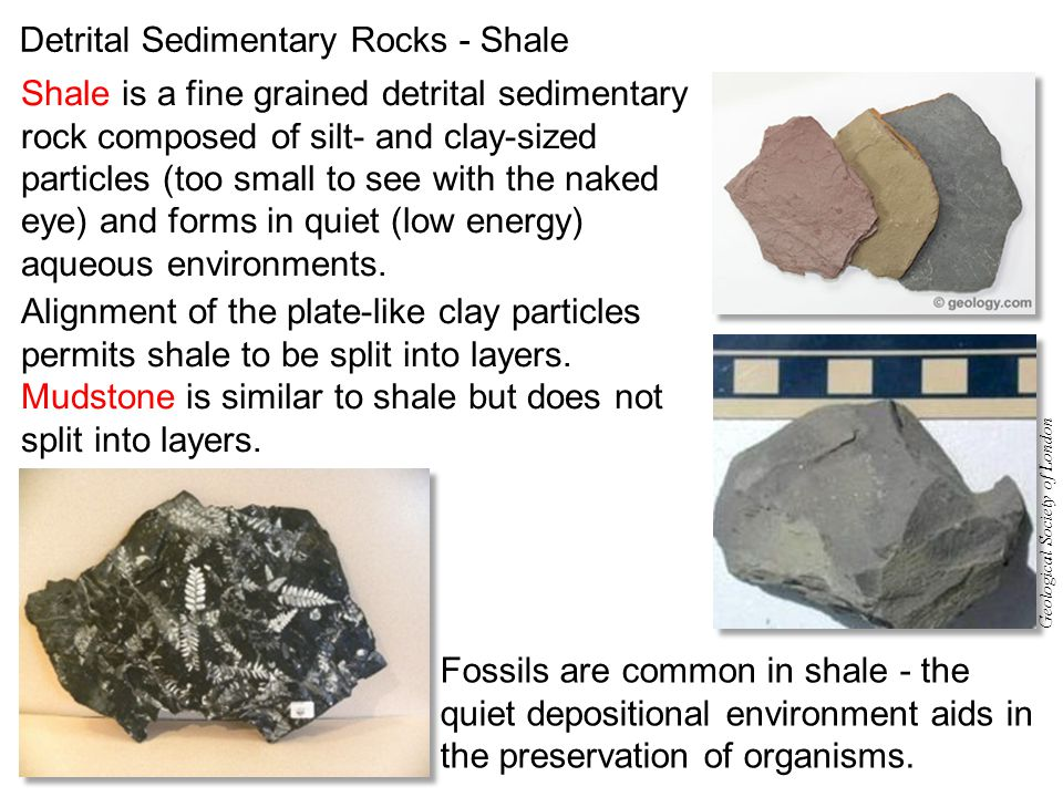 Detrital Sedimentary Rocks - Shale Shale is a fine grained detrital sedimentary rock composed of silt- and clay-sized particles (too small to see with