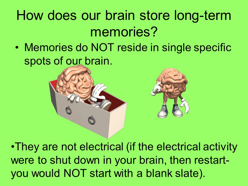 Long-Term Potentiation (LTP) The current theory of how our long-term memory works.