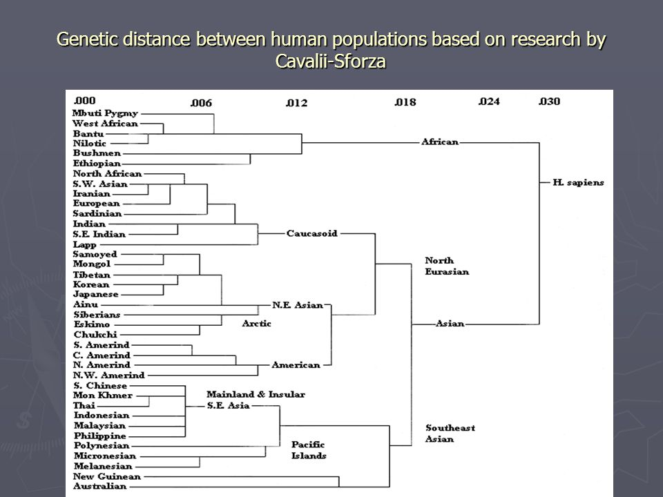 Genetic distance between human populations based on research by Cavalii-Sforza