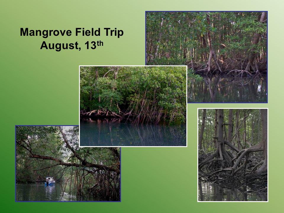 Mangrove Field Trip August, 13 th