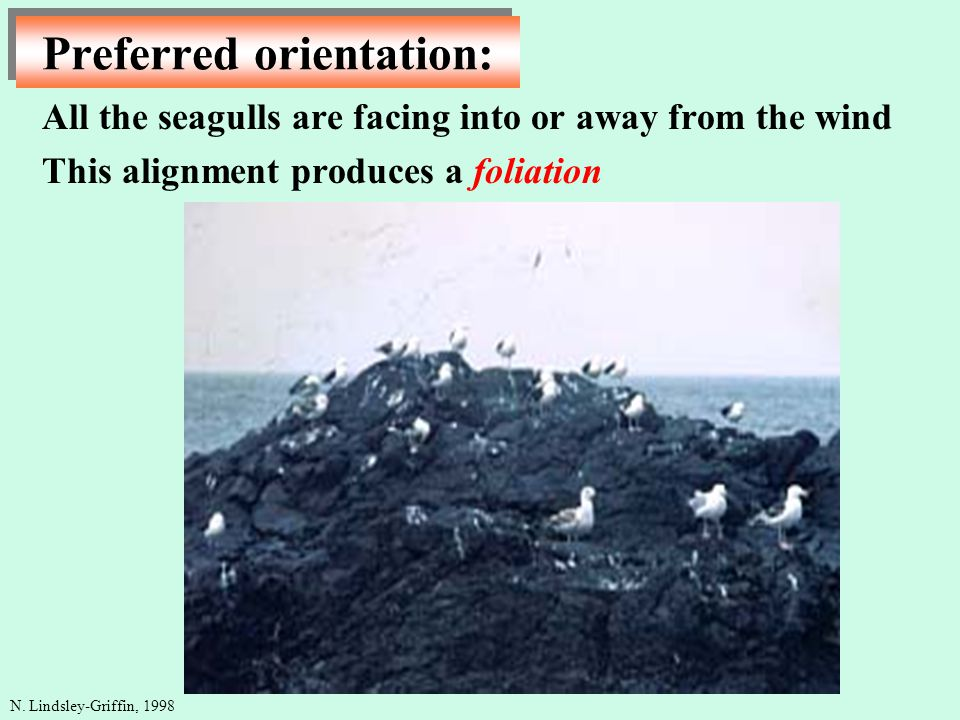 Preferred orientation: N. Lindsley-Griffin, 1998 All the seagulls are facing into or away from the wind This alignment produces a foliation