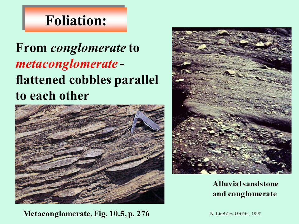 From conglomerate to metaconglomerate - flattened cobbles parallel to each other Foliation: N. Lindsley-Griffin, 1998 Metaconglomerate, Fig. 10.5, p.